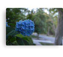 Norfolk Flowers Metal Print