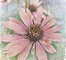 Cone Flower ll by Brenda Boisvert