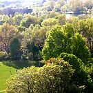 The View from my Balcony, Ottawa, Canada by Shulie1