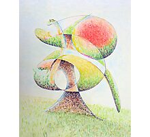 Fruit Tree Photographic Print