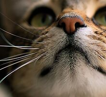 up close.. by Michelle McMahon