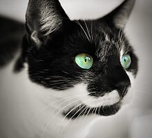 green eyes.. by Michelle McMahon