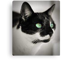 green eyes.. Canvas Print