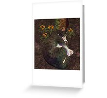 Sleeping in the sun Greeting Card