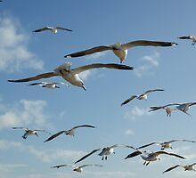 Seagulls by ddymock