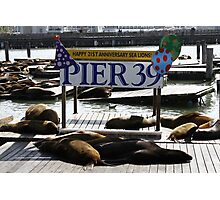 21 Years of Sea Lions Photographic Print