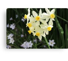 Jonquils in Spring Canvas Print