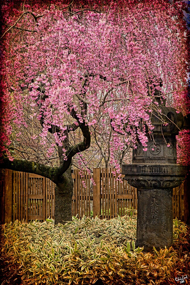 Asian Spring by Chris Lord