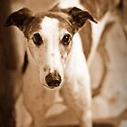 I smell roast chook by GreyhoundSN