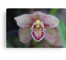 Pink and White Cymbidium Orchid Canvas Print