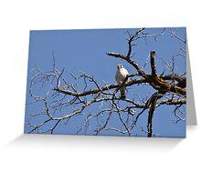 "American Kestrel ""Sparrow Hawk"" Greeting Card"