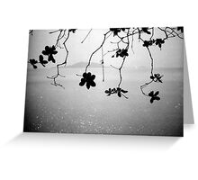 branches, kep, cambodia Greeting Card
