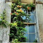 Window With Flowers by SuddenJim