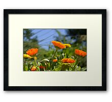 Cheerful Orange and Yellow Flowers Framed Print