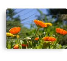 Cheerful Orange and Yellow Flowers Canvas Print