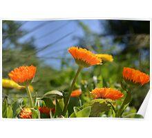 Cheerful Orange and Yellow Flowers Poster