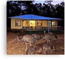 Kangaroos and Emus Canvas Print