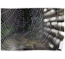 Morning dew spiderweb Poster