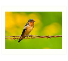 Barn Swallow On Barbwire Art Print