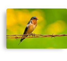 Barn Swallow On Barbwire Canvas Print