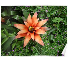 Bright orange flower explodes in bright colours Poster