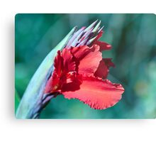 Canna Lily Show Off Metal Print