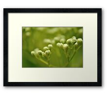 Nature's Cotton Swabs Framed Print