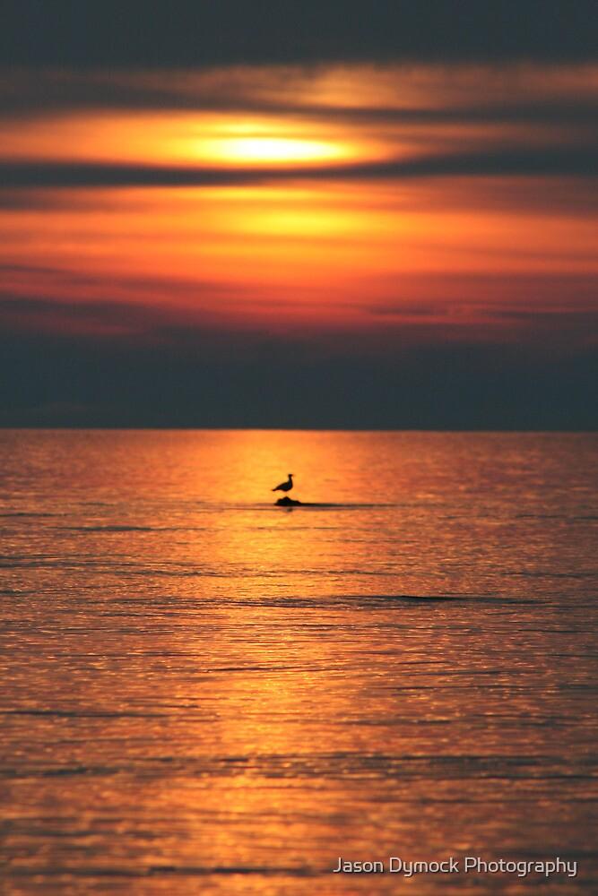Bird in the Sunset by Jason Dymock Photography