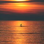 Bird in the Sunset by Jason Dymock Photography