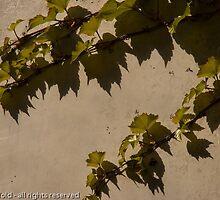 Virginia shadows by manifold53