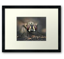 Fly Framed Print