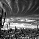 The Desert in B&amp;W by Saija  Lehtonen