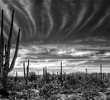 The Desert in B&W by Saija  Lehtonen