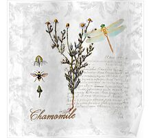 Chamomile herb Dragonfly Botanical illustration art Poster