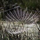 Pearls in a web by ienemien