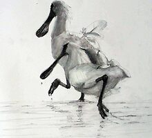 Birds of the Shoalhaven (pencil, royal spoonbill) by ColinWilliams
