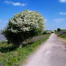 Hawthorn Way by hootonles
