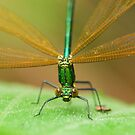 helicopter by davvi