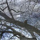 Kookaburra by Marius Brecher