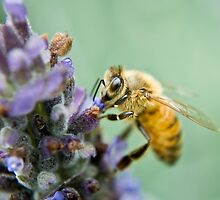 Busy Bee by sharon2121