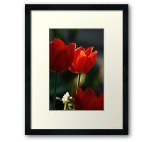 Tulip in sunshine lighting Framed Print