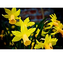The Garden of England in Bloom Photographic Print