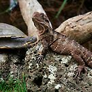 You have exactly 3 & half hours to get off my rock! by Cathy  Walker