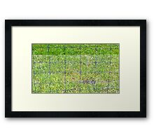Fence and Grass Framed Print