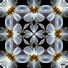 Translucent by Diane Johnson-Mosley