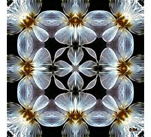 Translucent Photographic Print