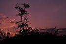 Dawn at Bunche Beach, As Is  by Kim McClain Gregal