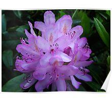 Purple Blooms Poster