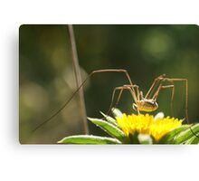 Spider on Flower Canvas Print
