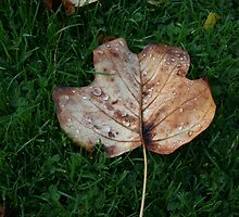 Fall of the Leaf Melancholia by patjila